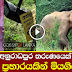 Youth killed in wild elephant attack in Anuradhapura