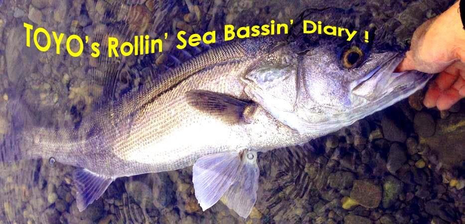 TOYO's Rollin' Sea Bassin' Diary