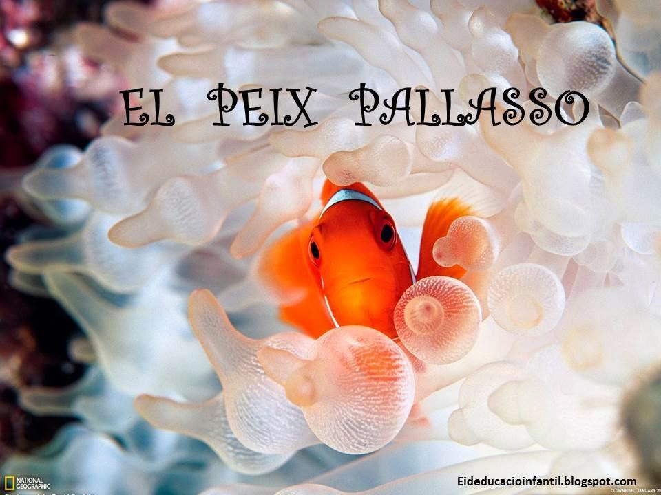 PROJECTE EL PEIX PALLASSO
