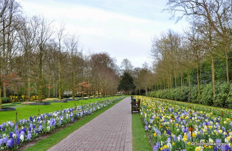 Keukenhof Tulip Garden, The Netherlands