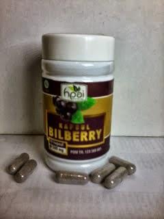 obat herbal manjur khasiat manfaat kapsul buah bilberry