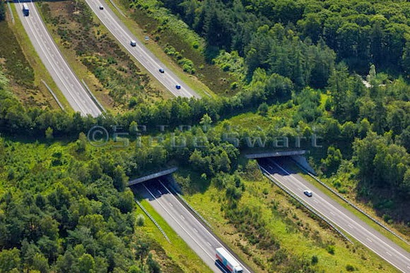 wildlife overpasses, green bridges, ecoducts
