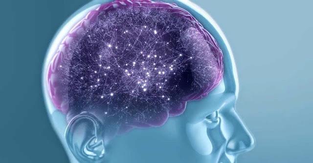 El cerebro, en biologia