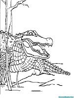 Mewarnai Gambar Alligator Raksasa Untuk Anak