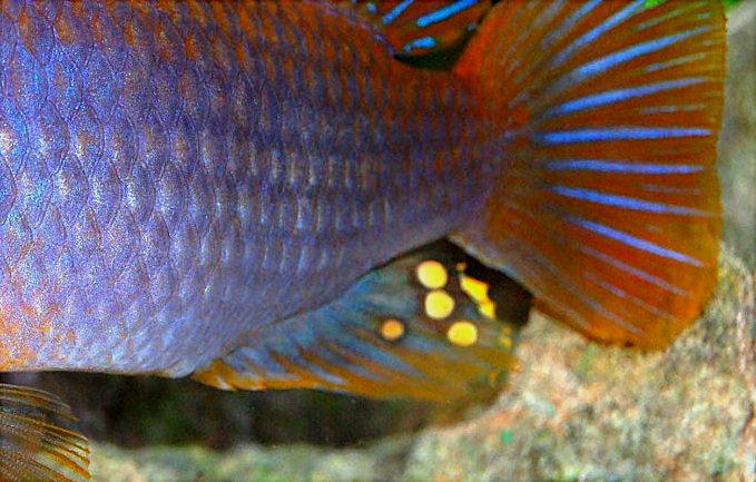 Akwapasja Akwarystyka Porady Ryby Rośliny Biotopy