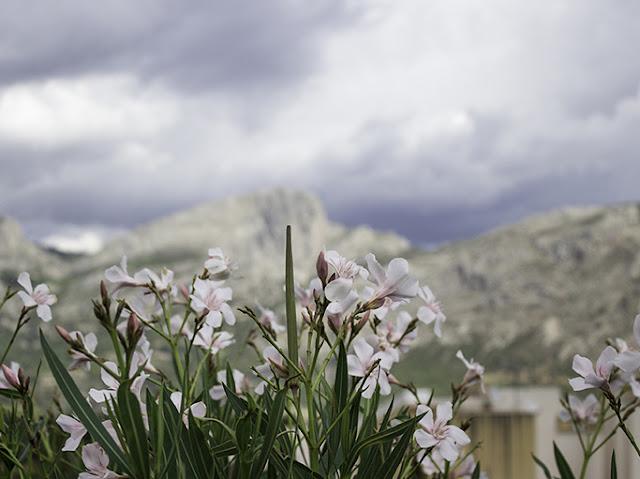 Adelfas, montaña