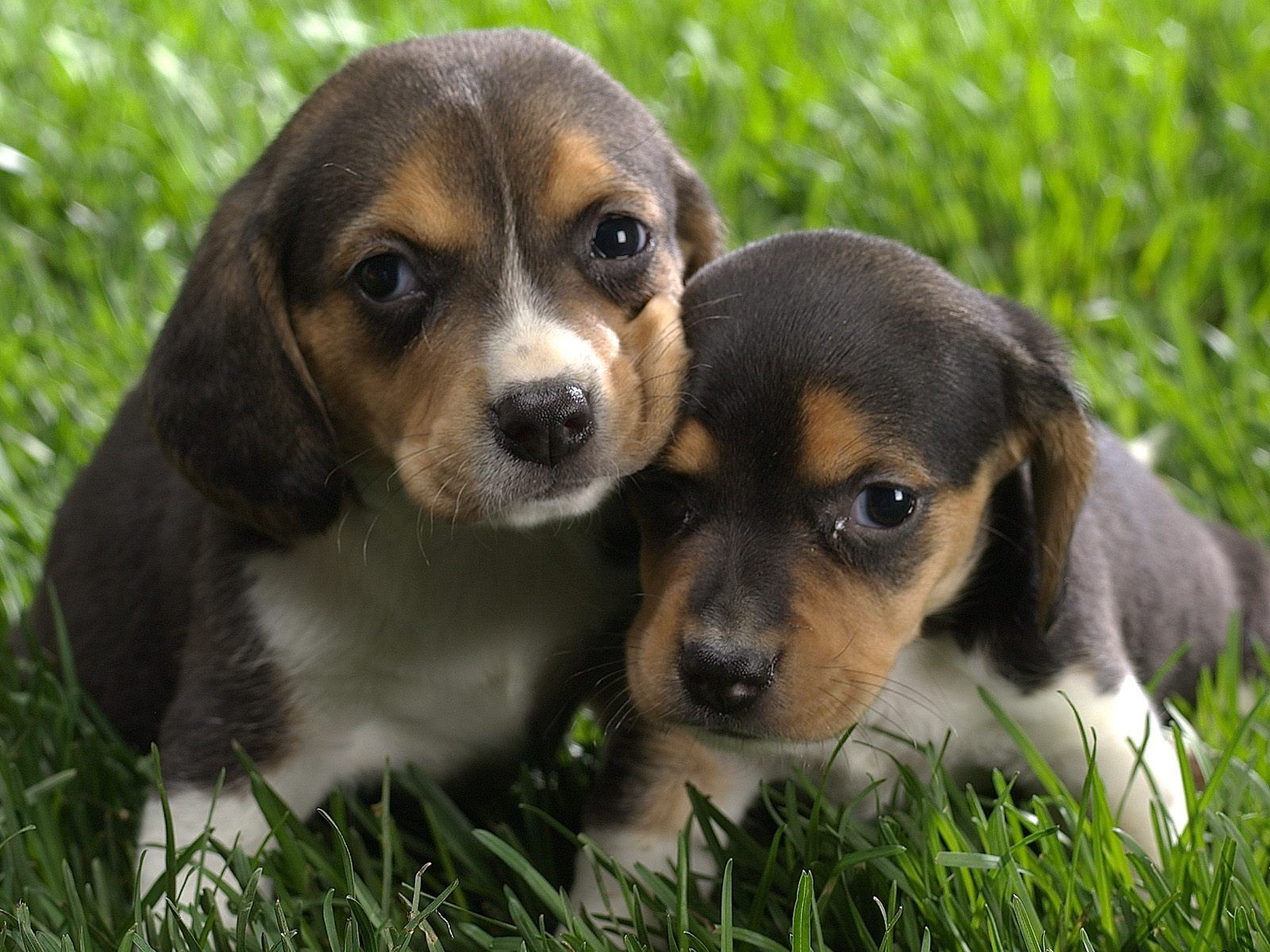 cute puppy pictures and beautiful dogs wallpapres | Nice ...