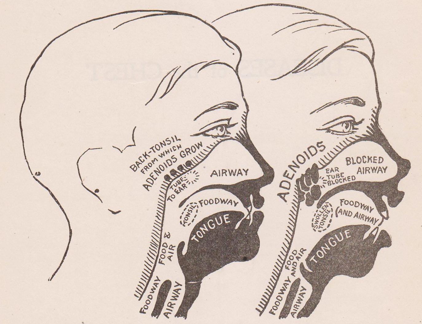 Free Vintage Clip Art   Health U0026 Medical Antique Illustrations