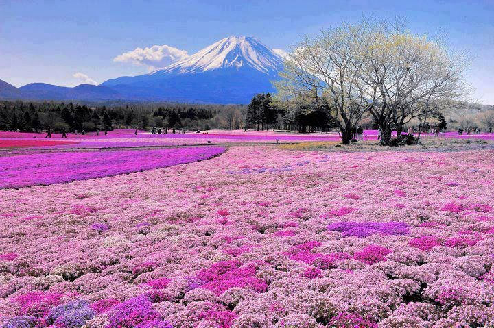 Beautiful Places You Must See Beautiful Spring Day Near Mount Fuji Japan