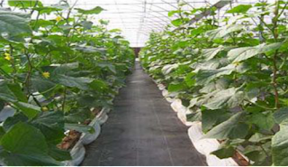 http://www.jlgreenhousesupplies.com/product/agricultural-film/ground-cloth.html