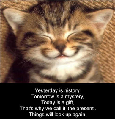 A funny pet picture of a cute kitten smiling with an inspirational cat saying. A motivational kitty photo and inspiring message from an adorable feline.