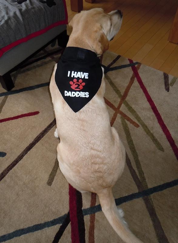 2 daddies Labrador bandana