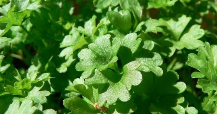 Invernablog plantas arom ticas en nuestro jard n for Jardinera plantas aromaticas
