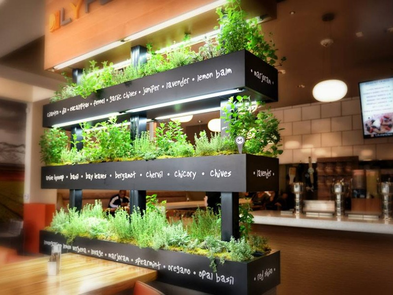 This cute display of fresh herbs reinforces the