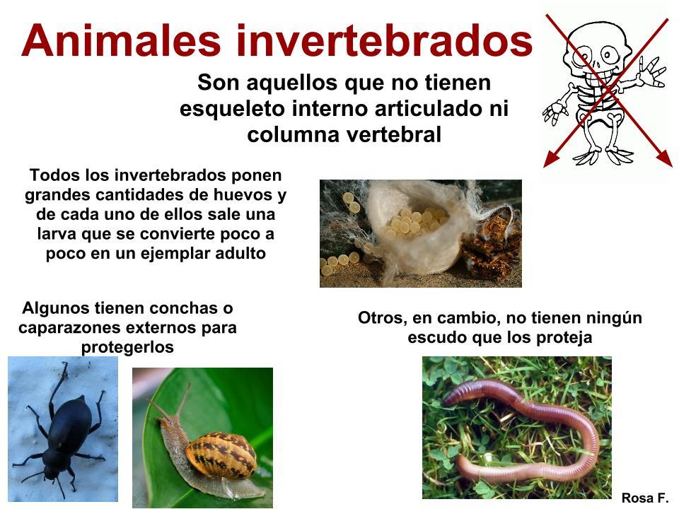 [PDF]Los animales Recursos - imagenes de animales invertebrados para imprimir