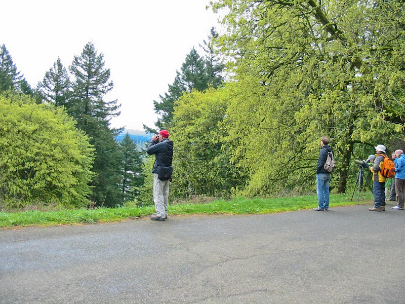Birders on Mount Tabor