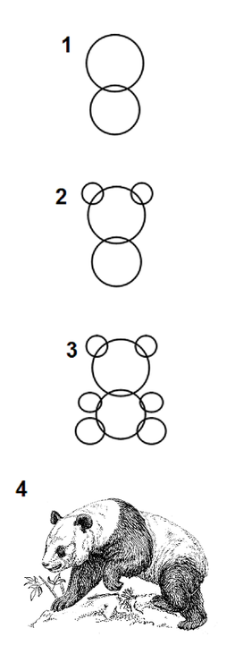 How To Draw A Bear - Step By Step Guide