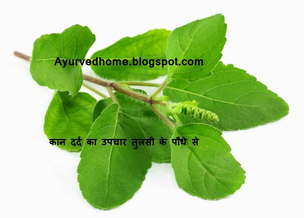 तुलसी के पौधे से इलाज