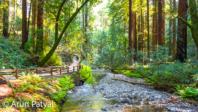 Some of the most beautiful tree photographs on internet are clicked at Redwood National and State Parks in California. This is one of the most beautiful places to explore in California and especially if you like to be around nature.  This Photo Journey shares some of the photographs from Redwood National and State Parks, which are clicked by Arun & Shivani.