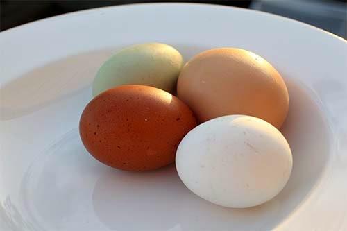 انواع البيض الاحمر والبلدي والابيض