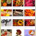 Happy Thanksgiving graphics messages greetings poems wishes to Love friends family
