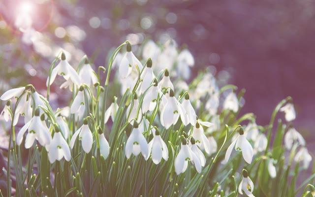 hoa dep da lat, hoa dep thien nhien