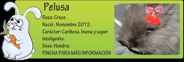 http://mirada-animal-toledo.blogspot.com.es/2013/04/pelusa-abandonada-con-solo-6-meses.html
