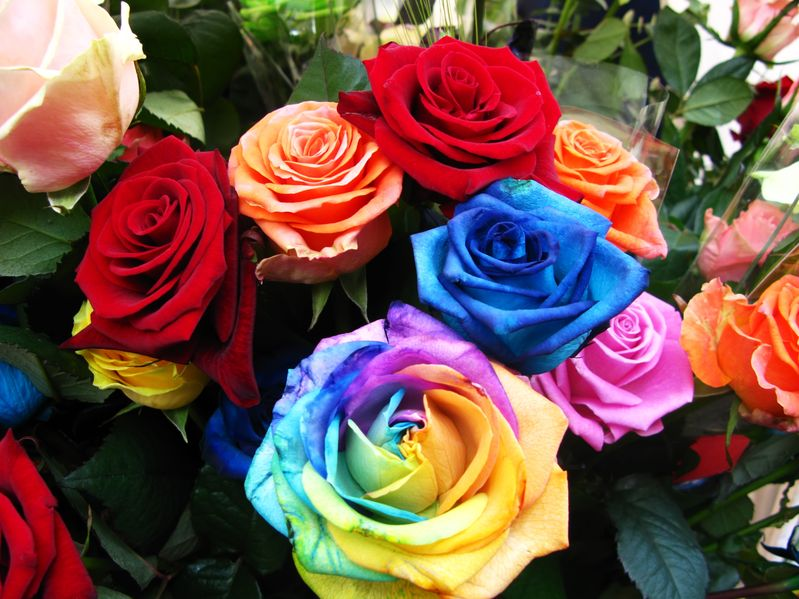 Banco de im genes rosas de colores para compartir en facebook - Fotos de rosas de colores ...
