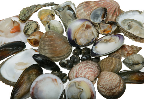 Shellfish Saving Tips