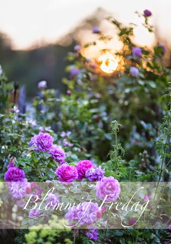 Häng med på blommig fredag!
