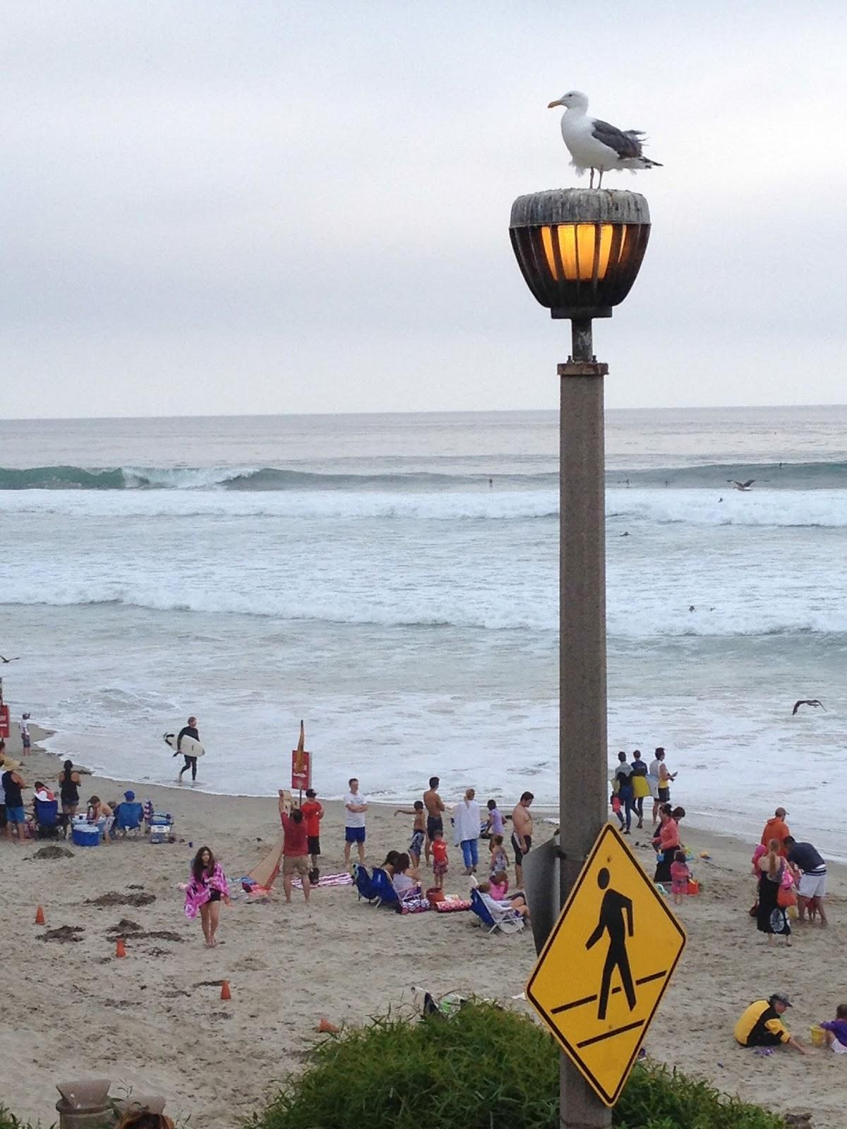 california, beach, seagull