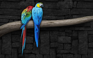Love parrots, Parrot Love HD Wallpapers, pair of parrots near the stone wall