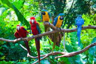 Grupo de loros sobre una rama
