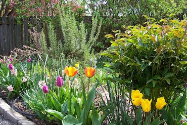 #9 Stunning Flowers Blooming