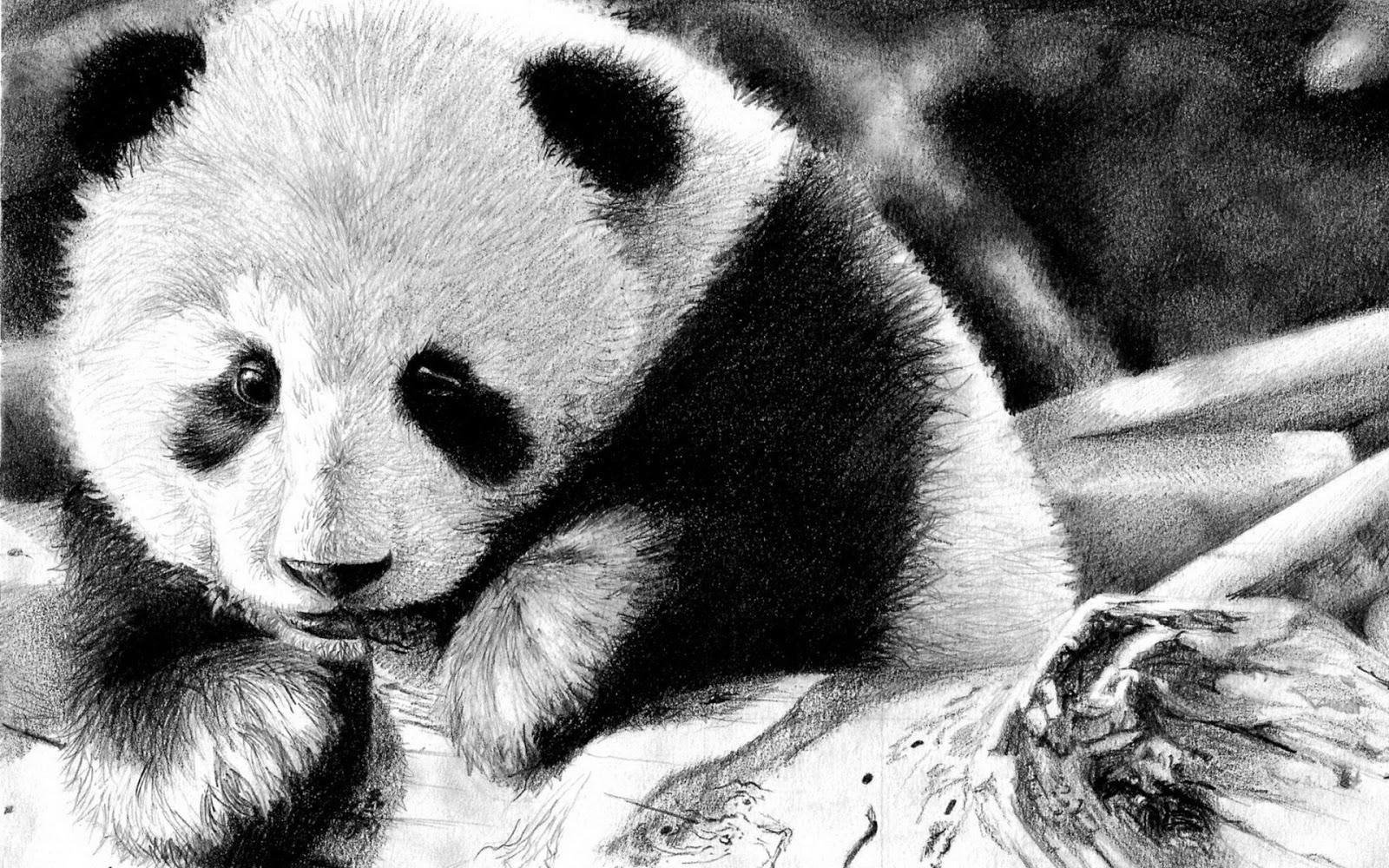 Sleeping Panda Wallpaper sleeping panda live wallpaper sleeping