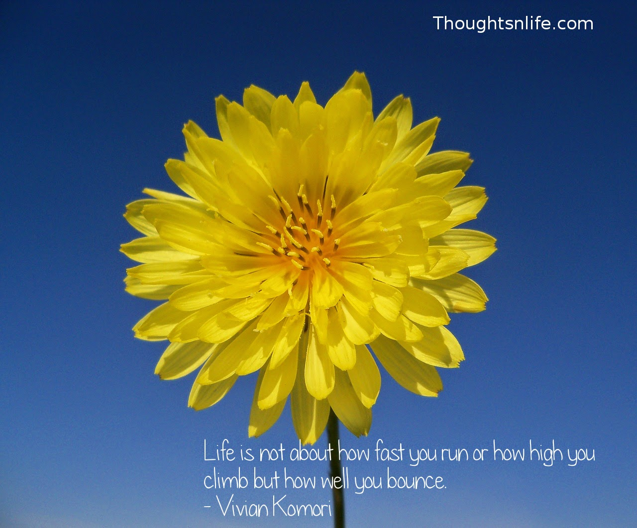 Thoughtsnlife.com : Life is not about how fast you run or how high you climb but how well you bounce. - Vivian Komori