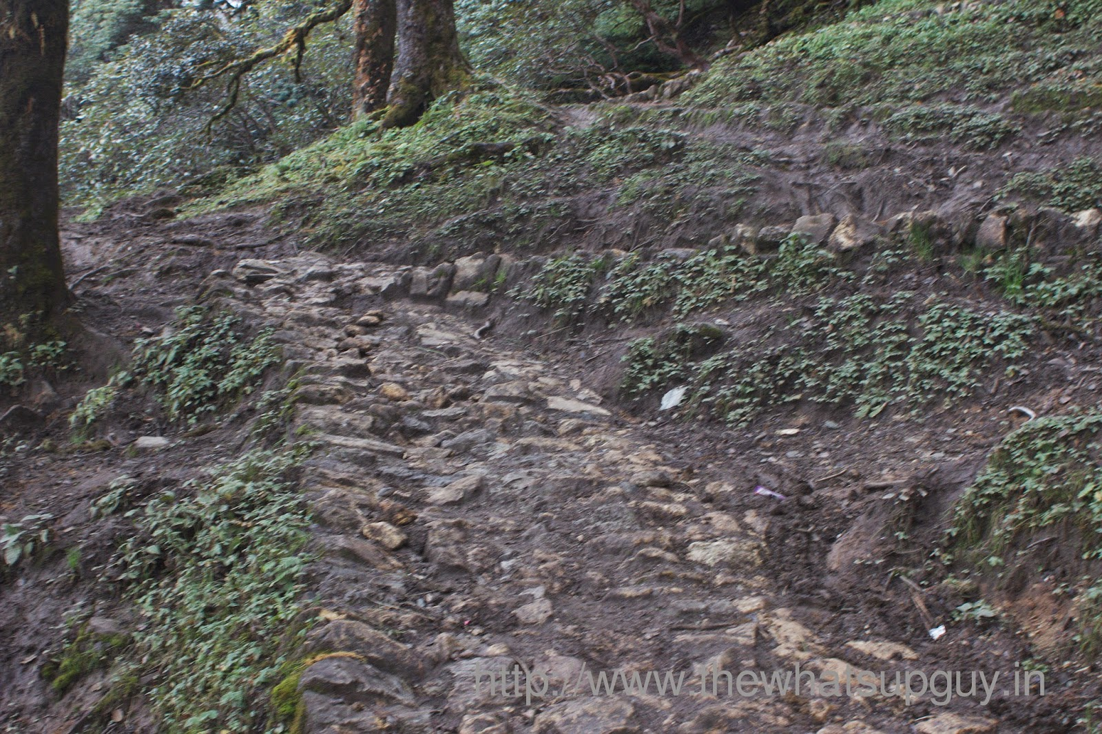 Rocky Trail Roopkund Trek With India Hikes Day 6