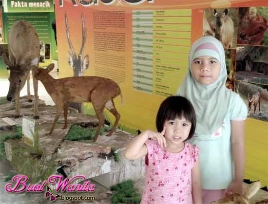 Muzium Alam Semulajadi Putrajaya Hidup Segan Mati Tak Mahu