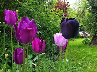wir lieben rosen farbkonzept f r den fr hlings garten. Black Bedroom Furniture Sets. Home Design Ideas