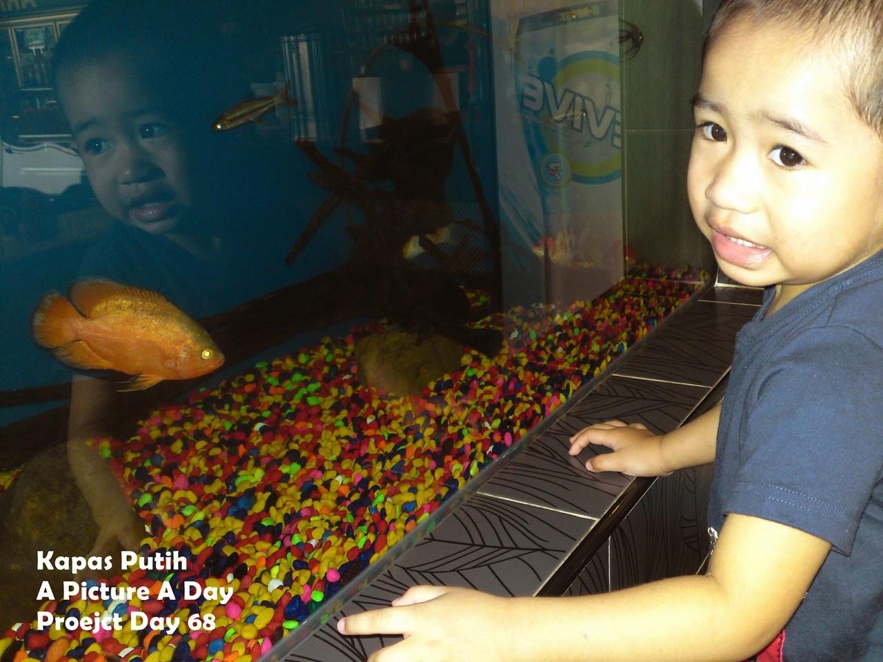 Baby Asyraf love fish