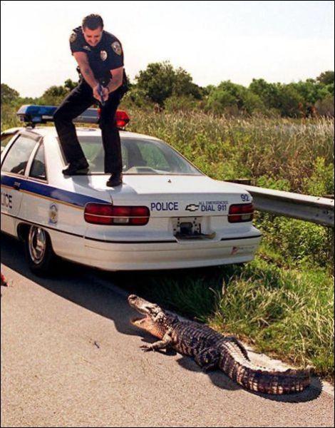 policial-vs-jacare