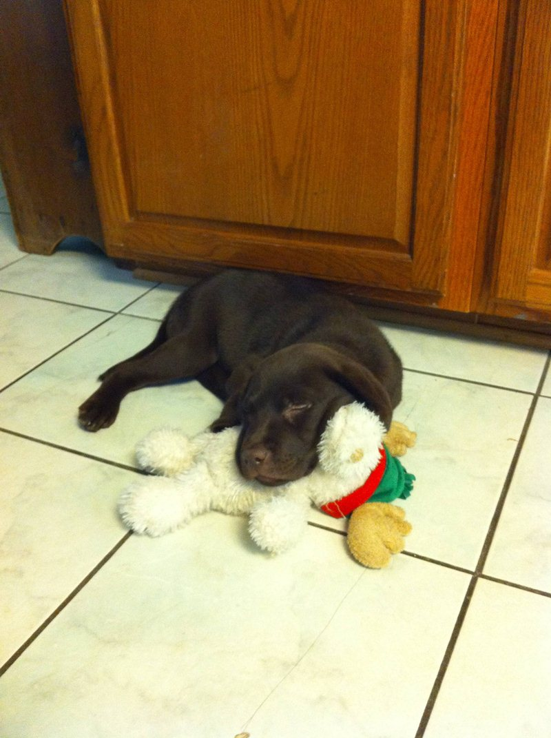 cute sleeping puppies, puppy sleeps with his toy