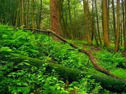 understory of forest