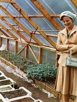 bonderøven drivhus