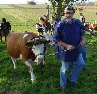 Après les chèvres, je pensais vous initier à la traite des vaches