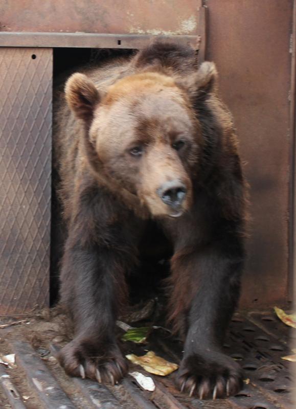 Картинка с медведем на самолете 23 февраля