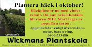 Plantera häcken i oktober!