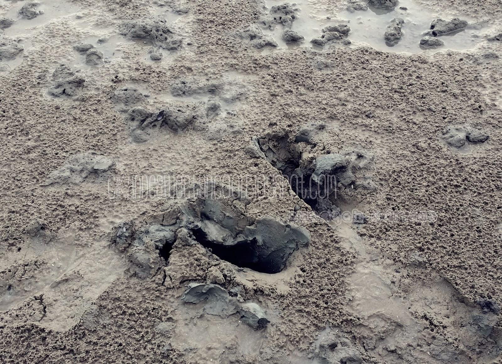 pantai dan lumpur