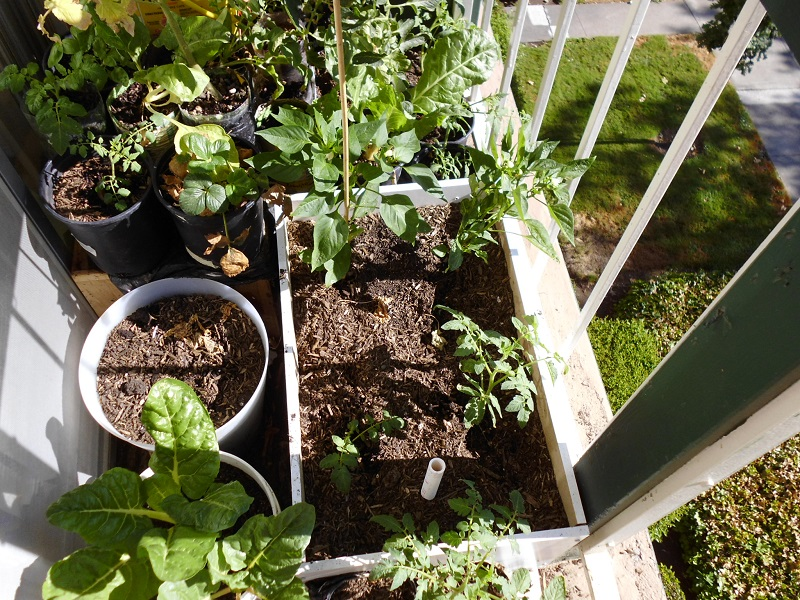 Tomatoes and peppers in subirrigated planter