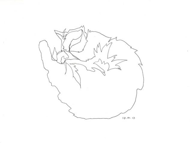кошки одной линией не отрываясь
